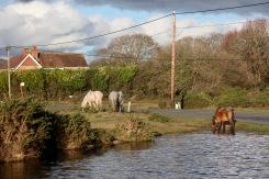 Ponies at pool 2