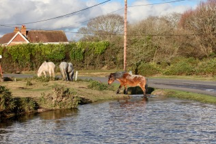 Ponies at pool 3