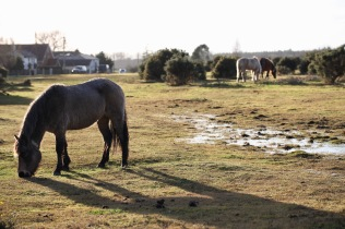 Ponies and shadow