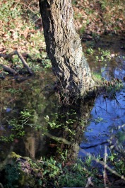 Tree reflected in pool