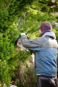 Aaron tidying cypress 1