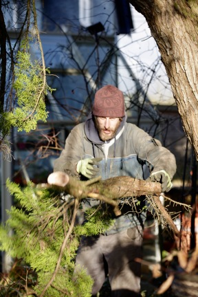 Aaron tidying cypress 4