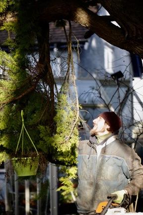 Aaron tidying cypress 5