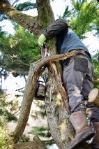 Aaron tidying cypress 6