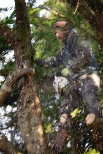 Aaron tidying cypress 9