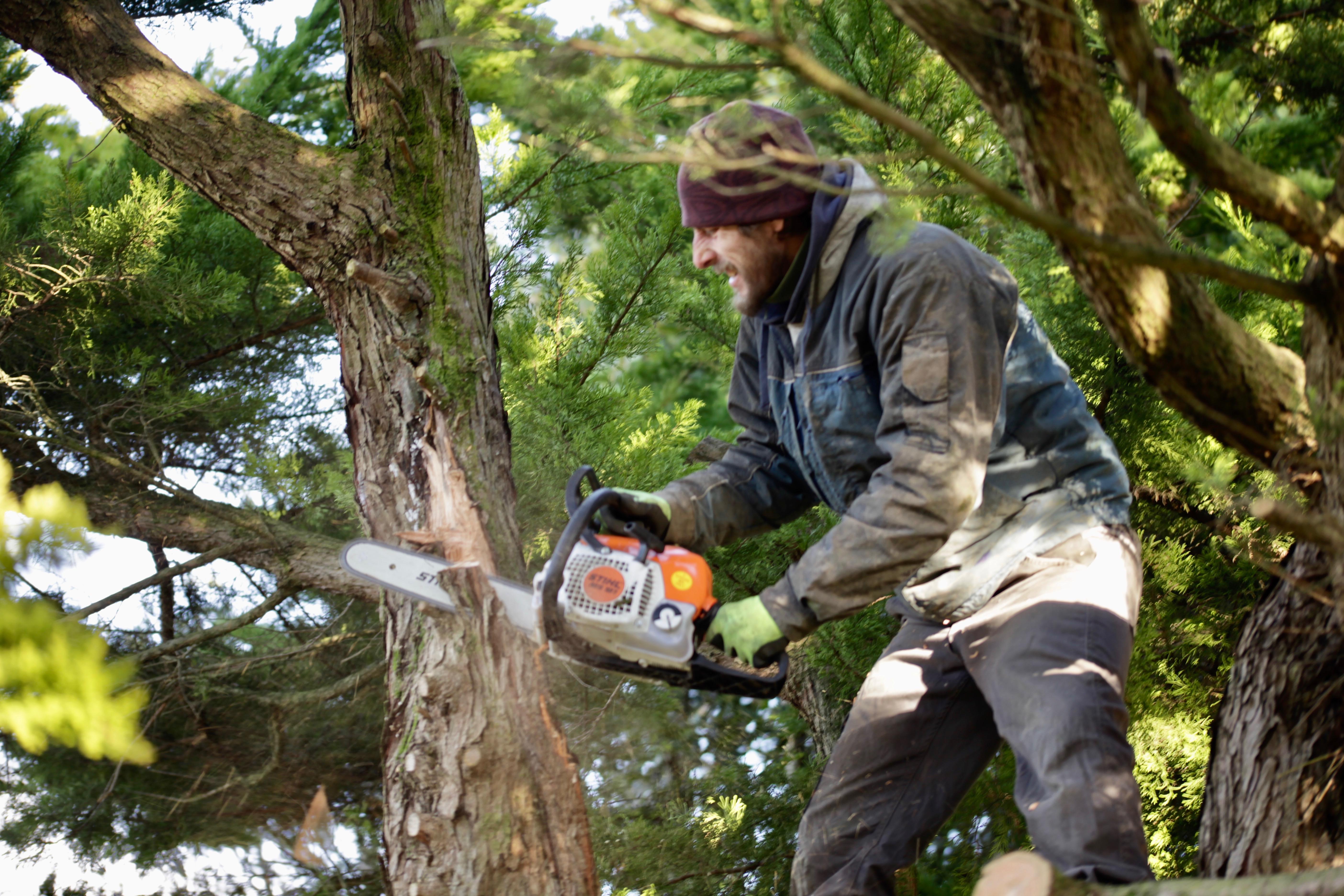 Aaron tidying cypress 12