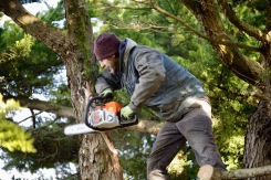 Aaron tidying cypress 13