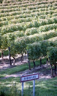 Vineyard 9.03