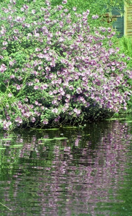 Mallow and reflections