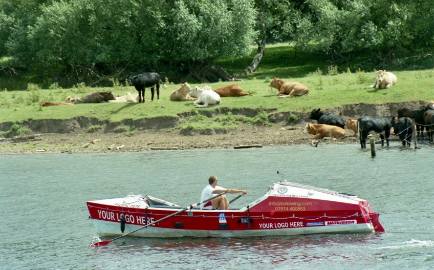 Sam in Pacific Pete on River Trent, cattle on bank