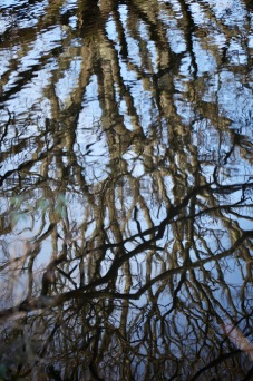 Reflections in pool 1