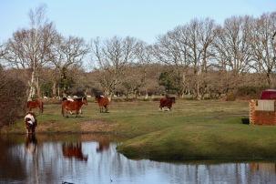 Pool, horses reflected 1