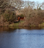 Pool, horses