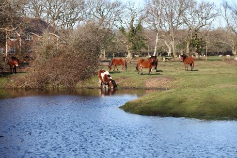Pool, horses 3