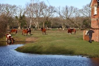 Pool, horses, workman