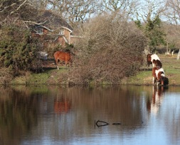 Pool, horses, reflections 3