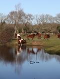 Pool, horses, reflections 4