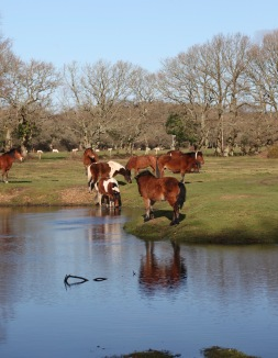 Pool, horses, reflections