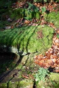 Shadow, moss, autumn leaves