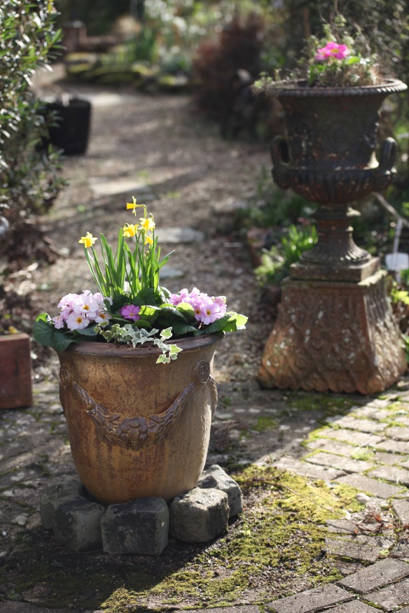 Urns with daffodils, primulas, and ivy