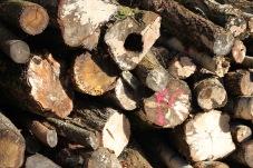Log stack 3
