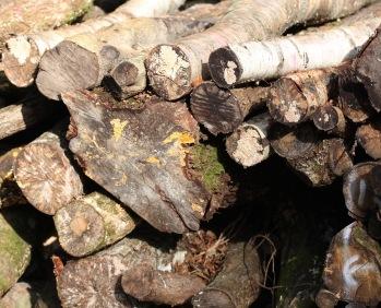 Log stack 4