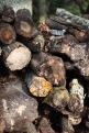 Log stack 5