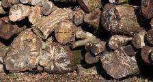 Log stack 6