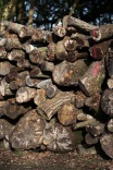 Log stack 7