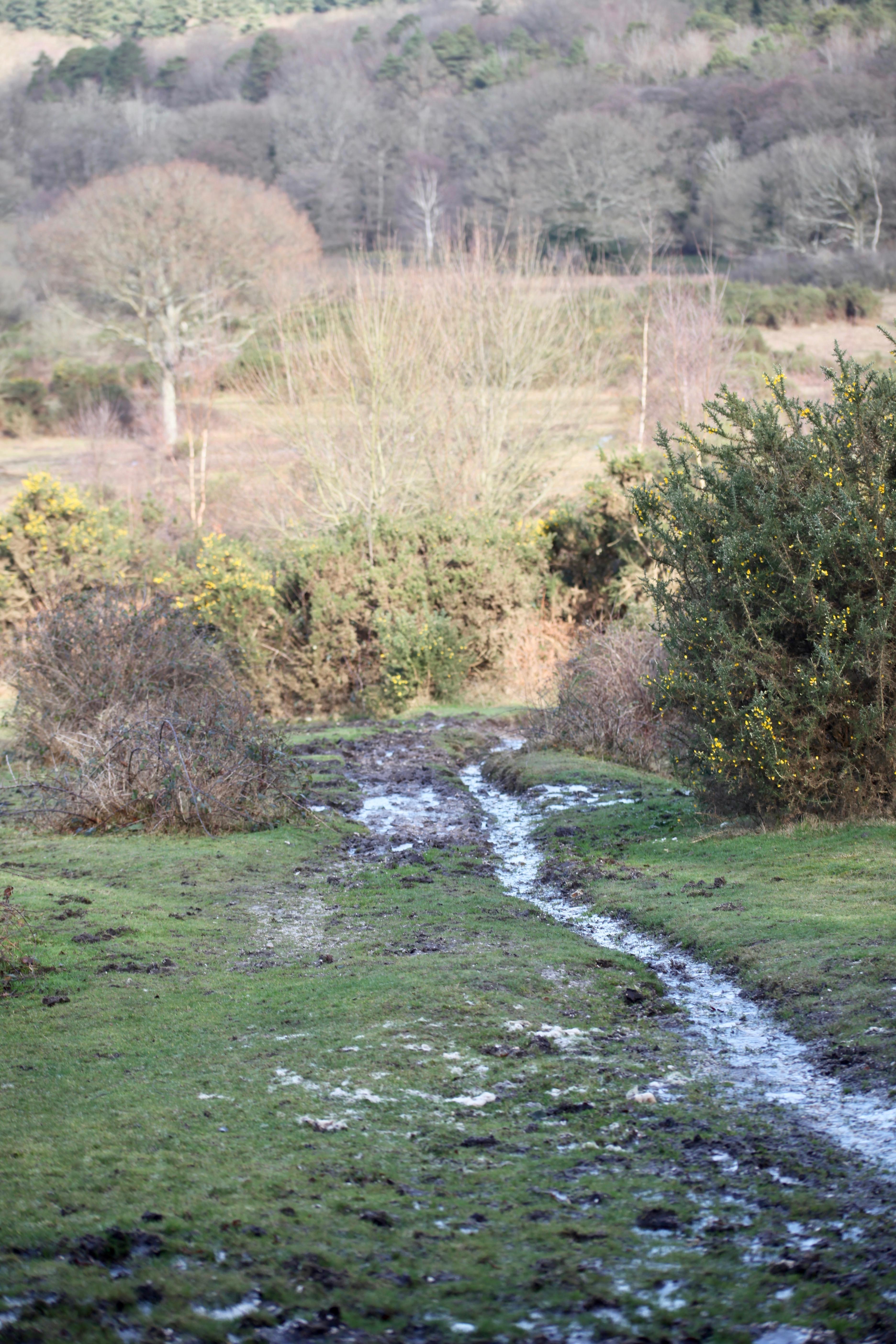 Path to landscape