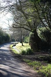 Royden Lane