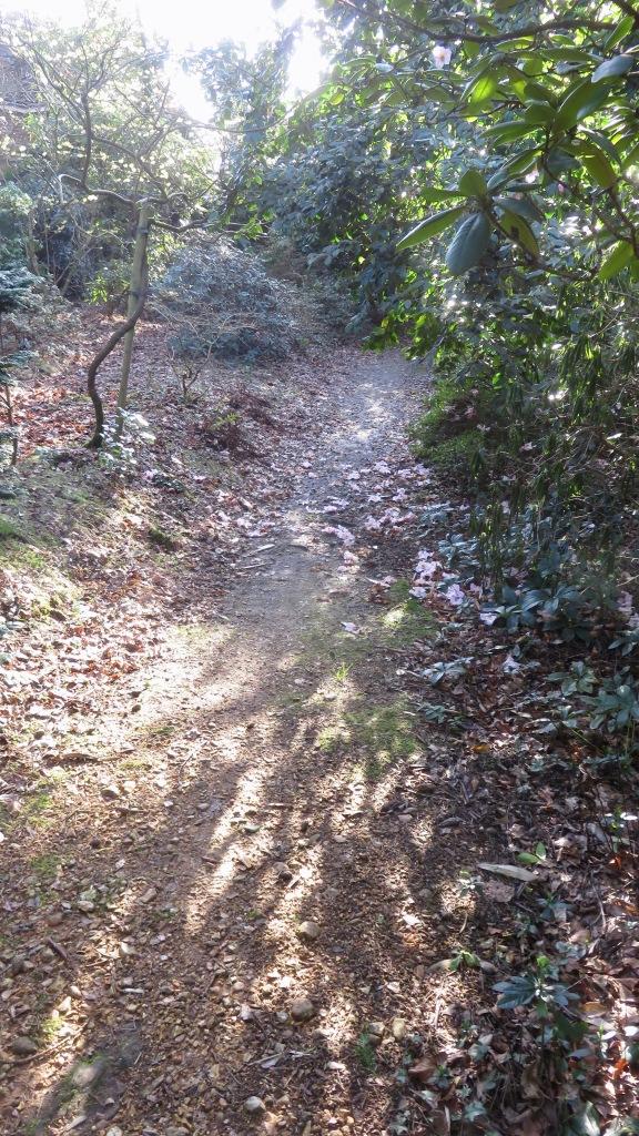 Path, sunlight, magnolias