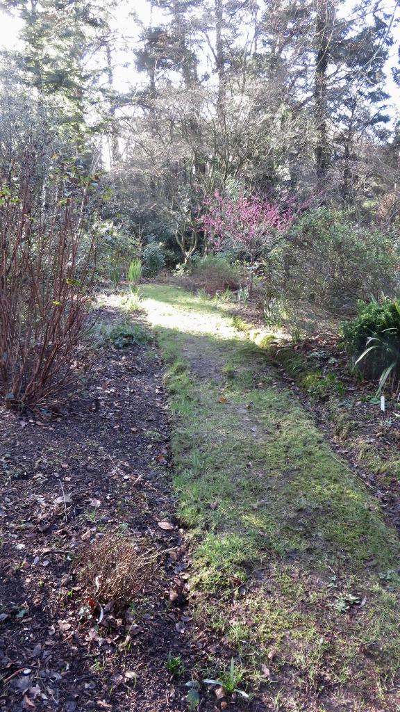 Path, sunlight, cherry blossom