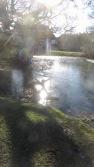 Sun on icy pool