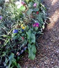 Primulas, snowdrops, bergenia