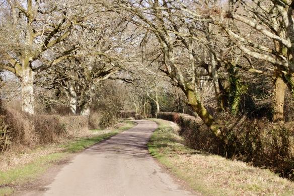 Staplewood Lane