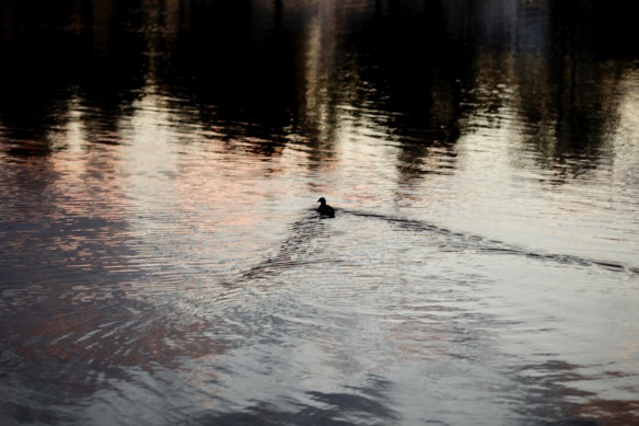 Waterfowl and reflected skies