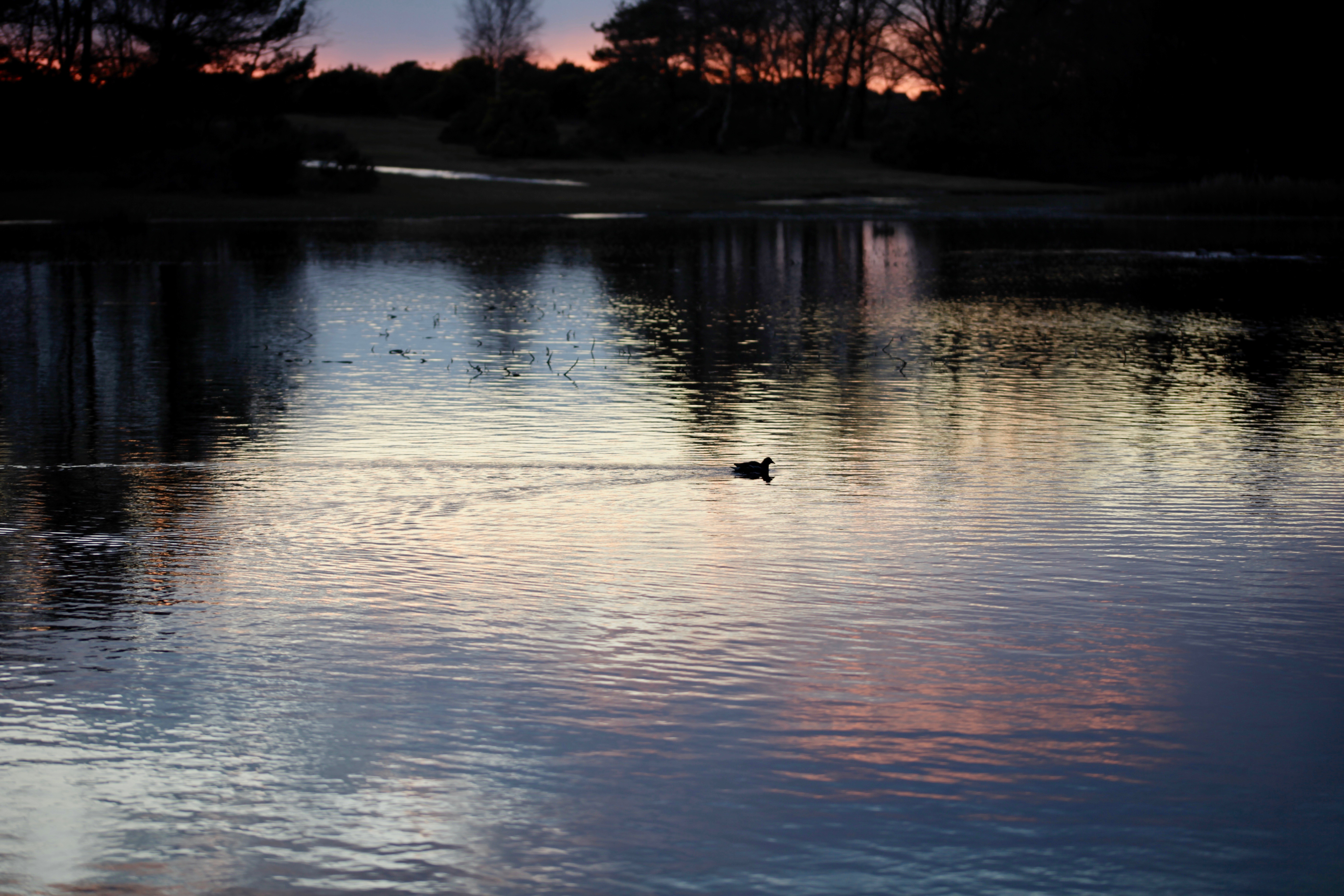 Waterfowl and cloud reflected at sunset