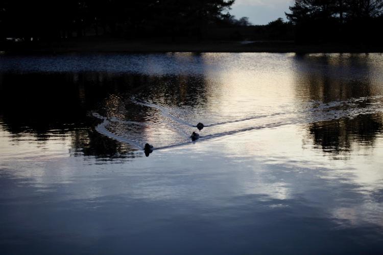 Waterfowl wakes