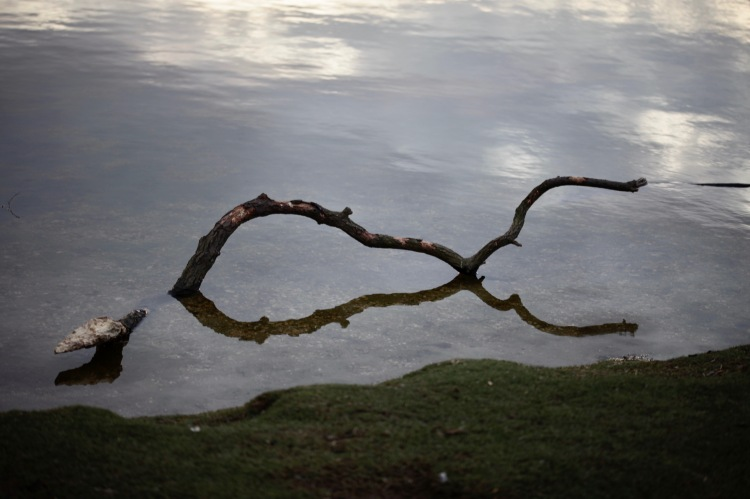 Branch in Hatchet Pond
