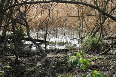 Marshy land, reedbeds