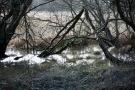 Marshy land