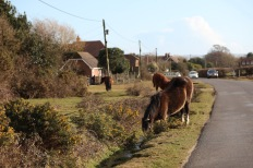 Ponies in ditch