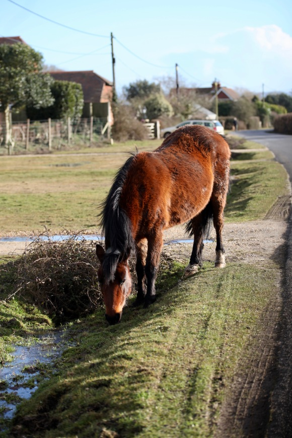 Pony in ditch