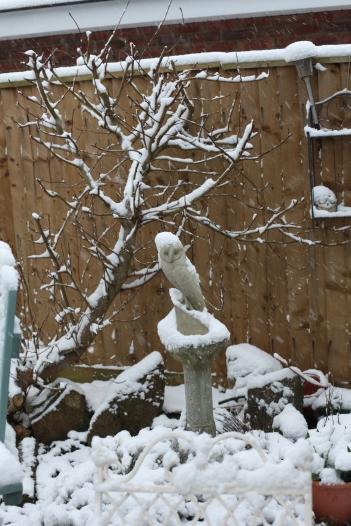 Garden in snow - owl