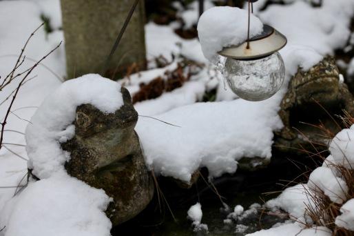 Frogs in snow caps
