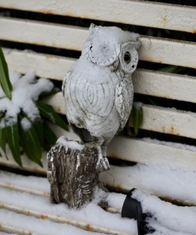 Owl with snow eye patch