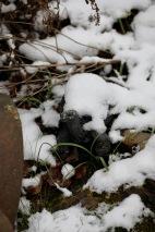 Tortoise in snow
