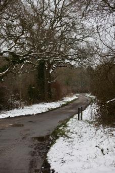 Dragon Lane