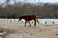 Pony in snow